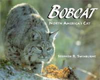 Bobcat cover