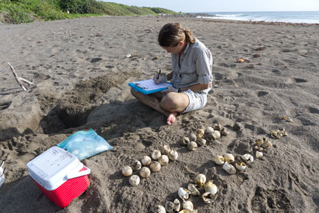 Dr. Kimberly Stewart doing a sea turtle nest excavation
