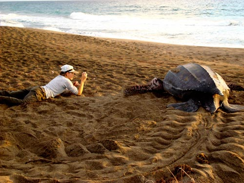 Kimberly takes photo of early morning nesting of leatherback.