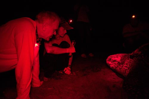 Steve and Kimberly explore the face of a nesting leatherback female.
